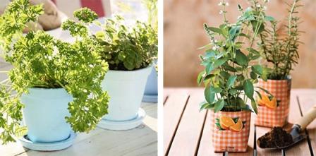 540248 Os temperos podem ser cultivados em casa. Foto divulgação Temperos caseiros: como cultivar