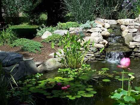 544799 Lago artificial no jardim dicas como fazer 2 Lago artificial no jardim: dicas, como fazer