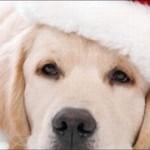 549119 capas comemorativas de natal para facebook 14 150x150 Capas comemorativas de Natal para Facebook