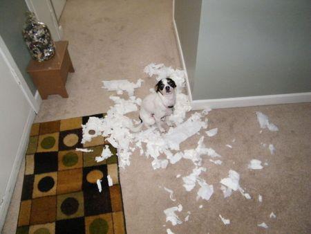 550040 cachorros fazendo bagunca fotos Cachorros fazendo bagunça: fotos
