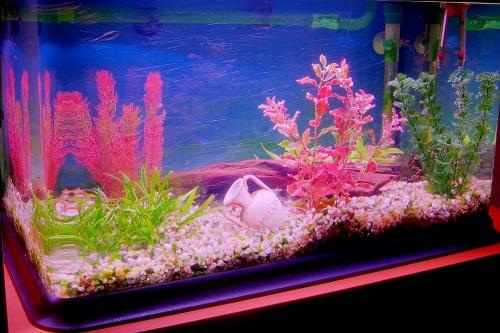 Decoração de aquário: dicas, fotos
