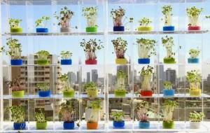 Plantas para ambientes pequenos 4