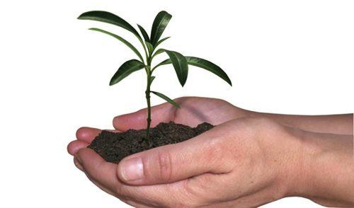 573894 mudas de arvores gratis como conseguir 2 Mudas de árvores grátis: como conseguir
