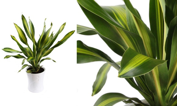 580168 Plantas para sala de estar 1 Plantas para sala de estar