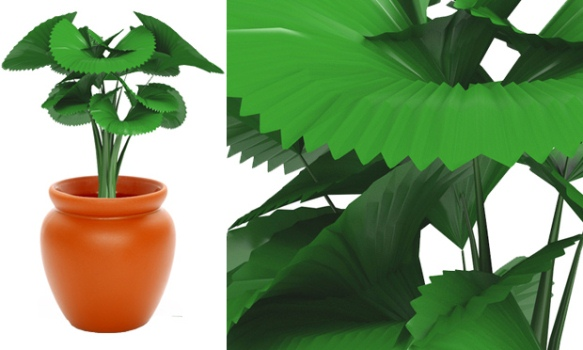 580168 Plantas para sala de estar 2 Plantas para sala de estar