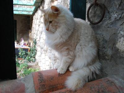 583234 Raças exóticas de gatos1 Raças exóticas de gatos