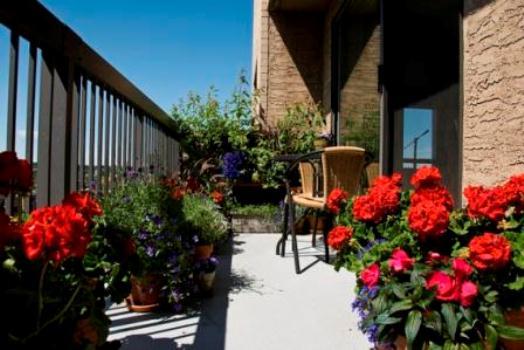 585627 As flores deixam as sacadas mais bonitas. Foto divulgação Sugestões de plantas para cultivar na sacada