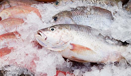 589613 Peixe como escolher cuidados ao comprar Peixe: como escolher, cuidados ao comprar
