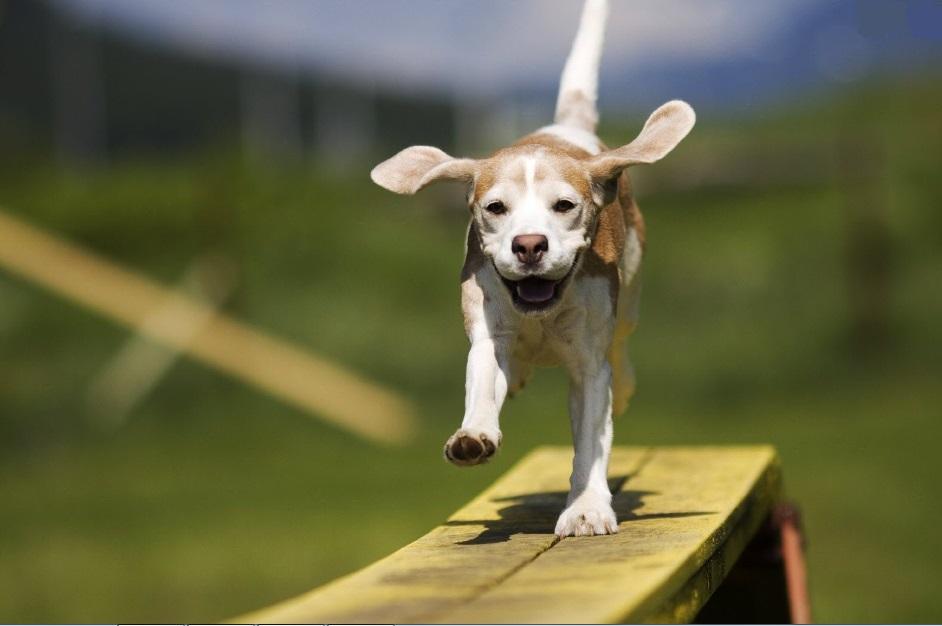 594946 Dicas de brincadeiras com o cão 2 Dicas de brincadeiras com o cão
