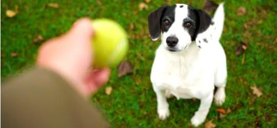 594946 Dicas de brincadeiras com o cão 3 Dicas de brincadeiras com o cão