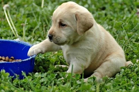 595750 Alimentação de cães cuidados Alimentação de cães: cuidados