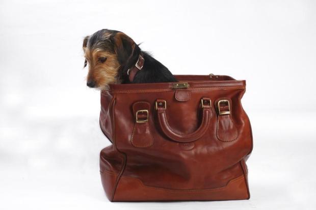596915 Viajar com animais de estimação o que levar 2 Viajar com animais de estimação: o que levar