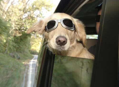 596915 Viajar com animais de estimação o que levar 3 Viajar com animais de estimação: o que levar