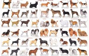 100 raças de cães a-z