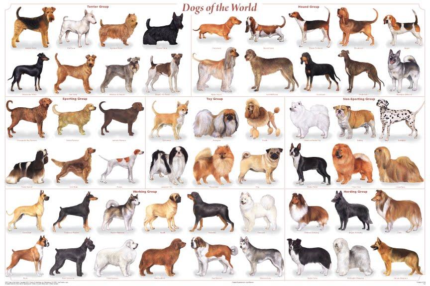 598838 100 raças de cães a z 7 100 raças de cães a z