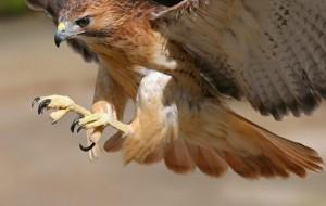 10-animais-mais-rápidos-do-mundo-4