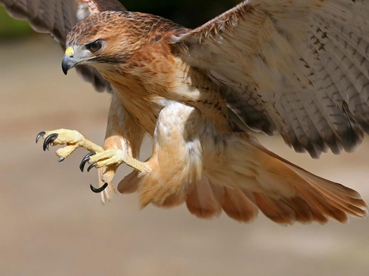 599312 10 animais mais rápidos do mundo 4 10 animais mais rápidos do mundo