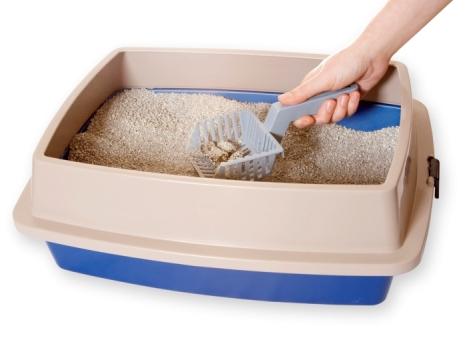 600002 Como ensinar gatos a urinar no lugar correto 2 Como ensinar gatos a urinar no lugar correto