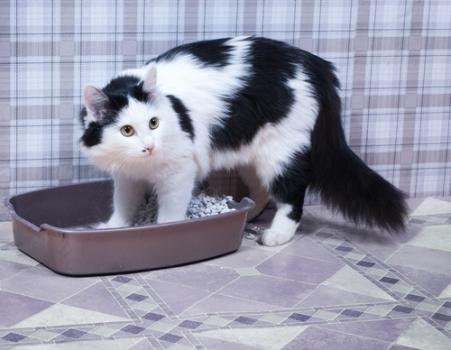 600002 Como ensinar gatos a urinar no lugar correto Como ensinar gatos a urinar no lugar correto