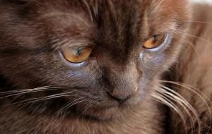 Gato-estressado-sintomas-como-tratar-3