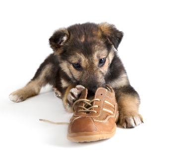 602979 Dicas para ensinar truques para o cachorro 4 Dicas para ensinar truques para o cachorro