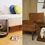 606177 Casinhas de cachorro diferentes fotos 150x150 Casinhas de cachorro diferentes: fotos