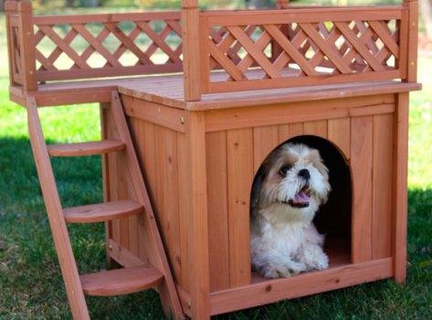 606177 Casinhas de cachorro diferentes fotos 4 Casinhas de cachorro diferentes: fotos