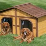 606177 Casinhas de cachorro diferentes fotos 7 150x150 Casinhas de cachorro diferentes: fotos