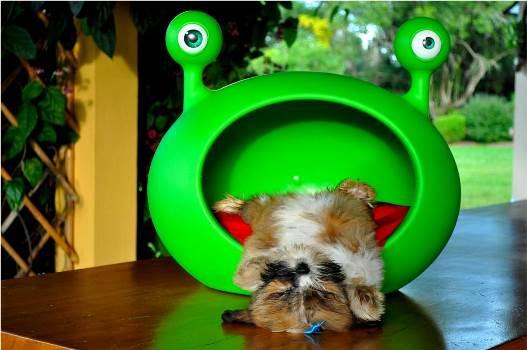 606177 Casinhas de cachorro diferentes fotos 9 Casinhas de cachorro diferentes: fotos