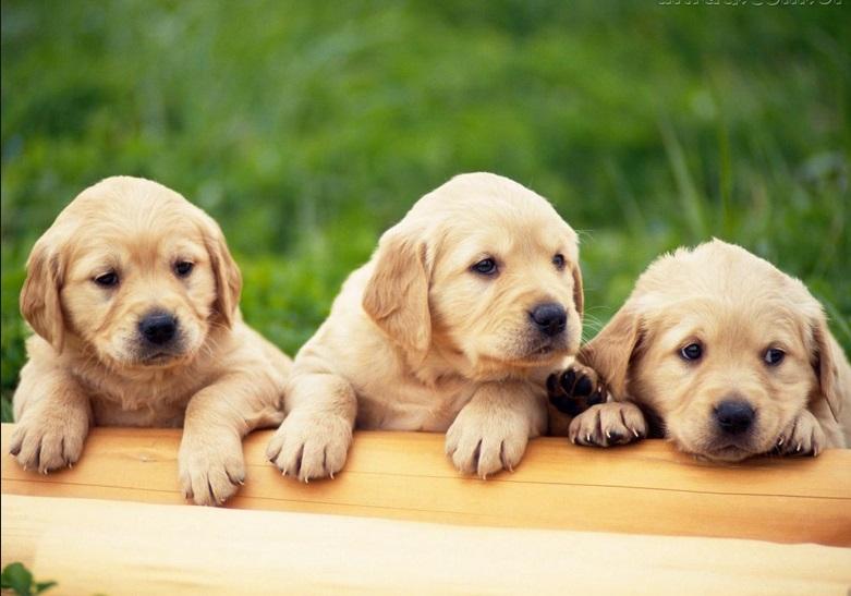 606356 Dicas para se comunicar com o cachorro 3 Dicas para se comunicar com o cachorro