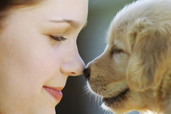 607736 como aplicar insulina em caes 2 Como aplicar insulina em cães