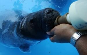 As-espécies-mais-dóceis-de-peixes-5
