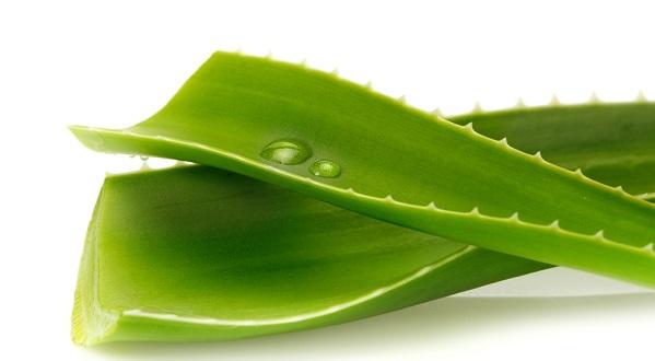 610515 estetica3 Dicas para cultivar plantas medicinais em casa