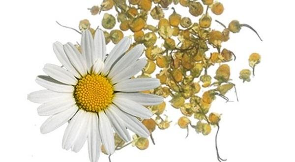 610515 onde comprar venda propriedades de flores secas de camomila macaneta doce para sabonetes velas cosmeticas Dicas para cultivar plantas medicinais em casa