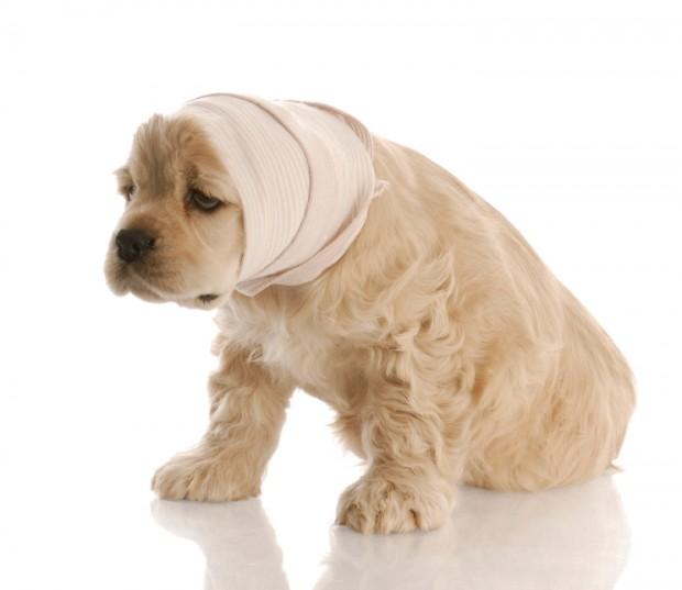 615906 Remédios caseiros para cães 2 Remédios caseiros para cães