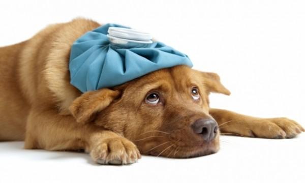 615906 Remédios caseiros para cães 3 Remédios caseiros para cães