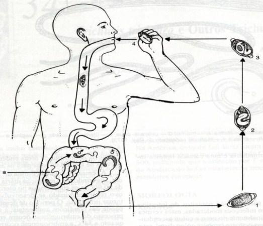 617320 O vermes podem ser transmitidos para os humanos de várias formas. Foto divulgação Tratamento caseiro para Verme