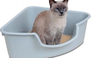 Como-ensinar-o-gato-a-urinar-no-lugar-certo-3