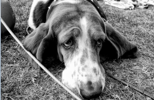 631200 Cinomose canina o que é como tratar 2 Cinomose canina: o que é, como tratar