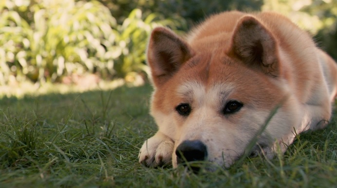 631200 Cinomose canina o que é como tratar 3 Cinomose canina: o que é, como tratar