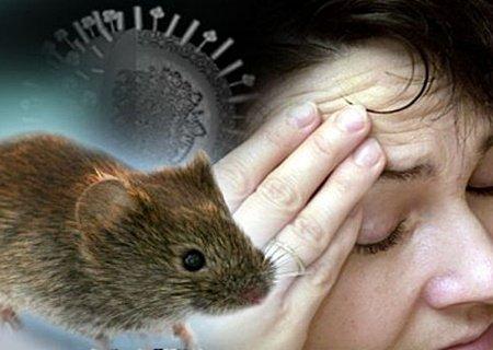632996 A hantavirose é uma doença que pode cursar com manifestações clínicas variadas. Hantavírus: sintomas, transmissão, tratamento