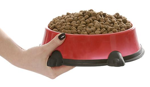 637055 Cuidados alimentares com os cachorros diabéticos 3 Cuidados alimentares com os cachorros diabéticos