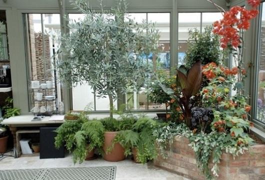 fotos de jardim grande: para jardim de externo plantas para jardim grande plantas para Quotes