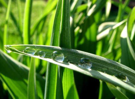 650694 Saiba mais sobre a água em pó grande promessa contra seca 2 Saiba mais sobre a água em pó, grande promessa contra seca