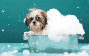 Carrapato em cães, como evitar 2