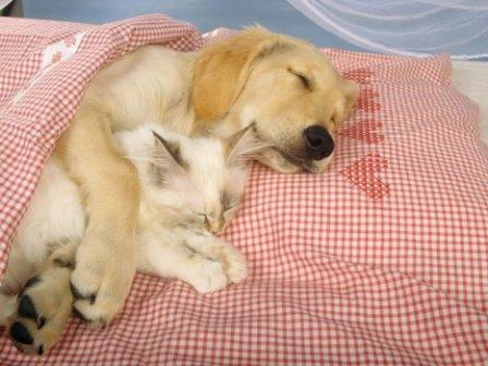 656594 Os donos devem lavar os objetos dos cães e dos gatos contaminados para evitar a infecção de outros animais. Foto divulgação Sarna em cães e gatos: como tratar
