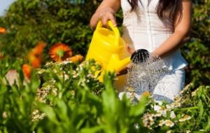Como plantar petúnias 1