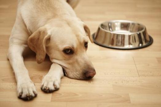 661241 A anemia em cães pode ser causada pode ser causada por vários fatores. Foto divulgação Como curar cães com anemia