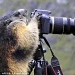 666308 animais fazendo pose de humanos fotos 21 150x150 Animais fazendo pose de humanos: fotos