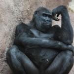 666308 animais fazendo pose de humanos fotos 32 150x150 Animais fazendo pose de humanos: fotos